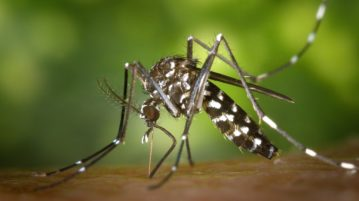 Malaria symptoms and remedy