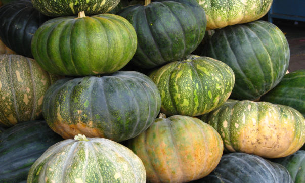 Know the health benefits of Pumpkin